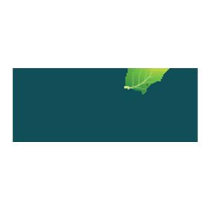 الدر-Elder